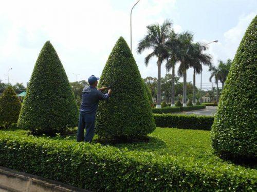 dịch vụ chăm sóc cây xanh,