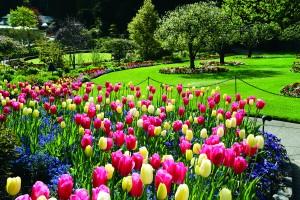 Butchart-Gardens1