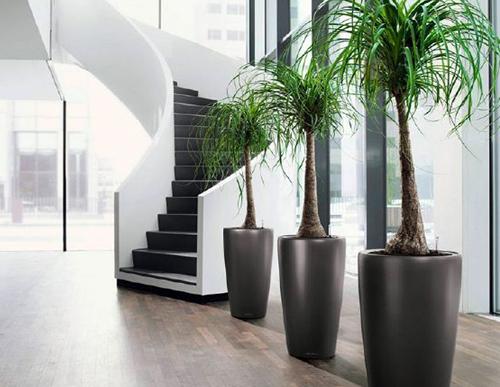 Cho thuê cây cảnh, cho thuê cây xanh văn phòng