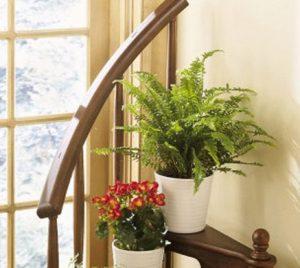 5 điều cần lưu ý khi chăm sóc cây xanh trong nhà
