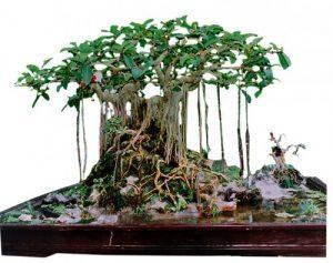 Bí quyết chăm sóc cây xanh tại nhà