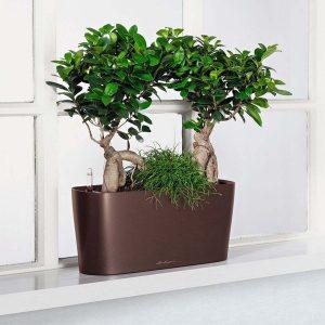 Cách trồng và chăm sóc cây cảnh trong chậu cho cây phát triển tốt nhất